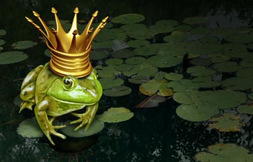 צפרדע הנטוורקינג